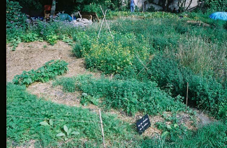 Couvert vegetal le sens de l 39 humus for Jardin couvert lyon