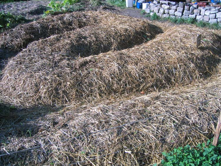 La culture sur buttes fiche technique le sens de l 39 humus for Culture des jardins
