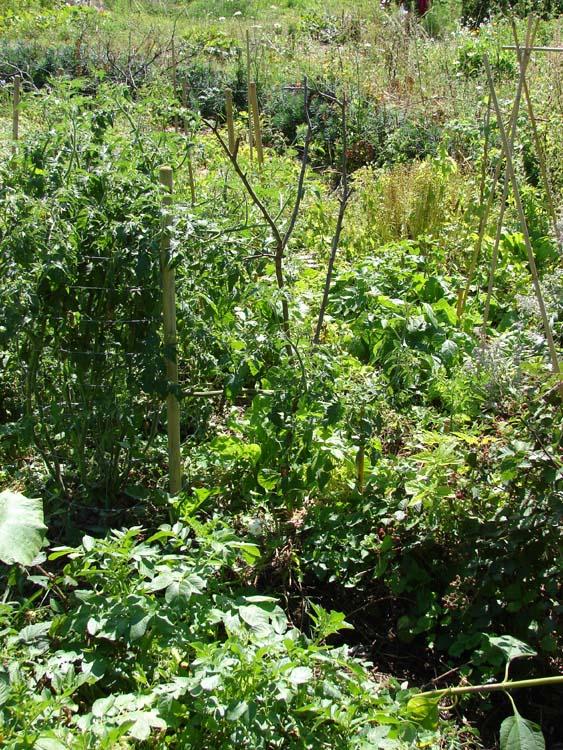 La culture sur buttes perma potagers for Rendement permaculture