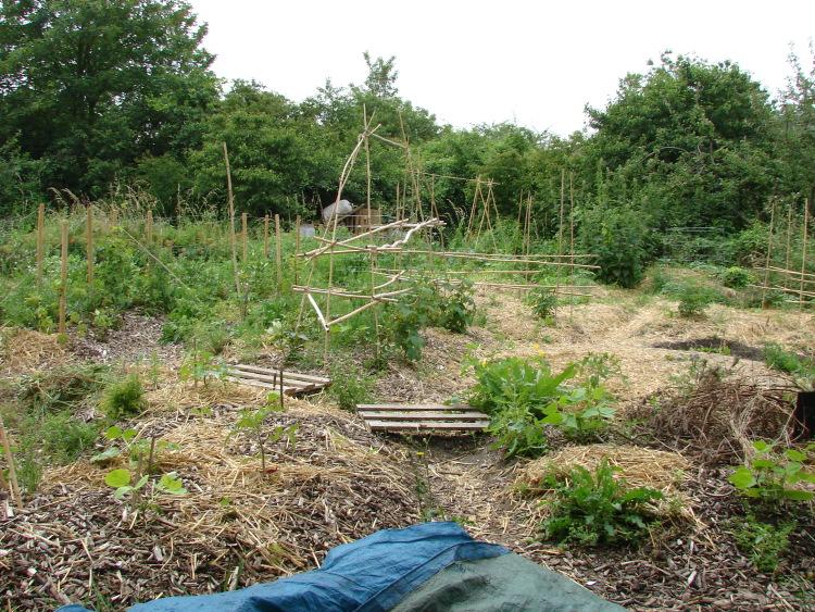 comment planter sur une butte de permaculture
