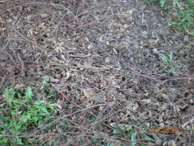 Du bon usage de la biomasse v g tale ligneuse 1 2 le for Amaryllis ne fait que des feuilles